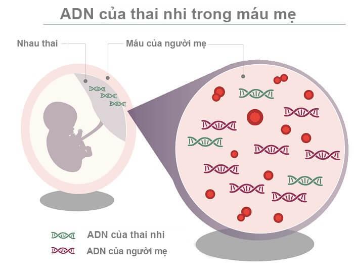 Xét nghiệm ADN thai nhi